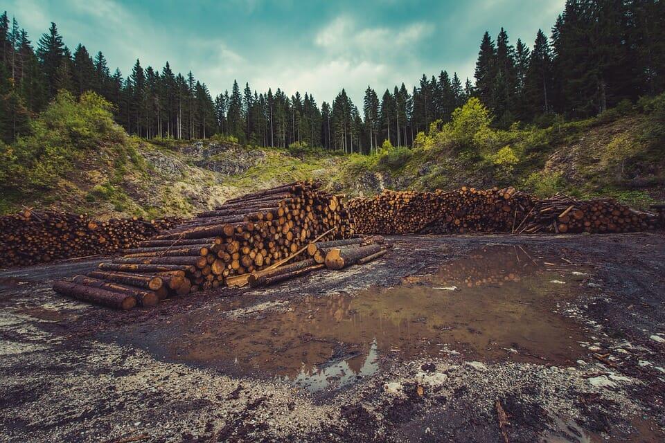 impacto ambiental por deforestacion y tala de arboles